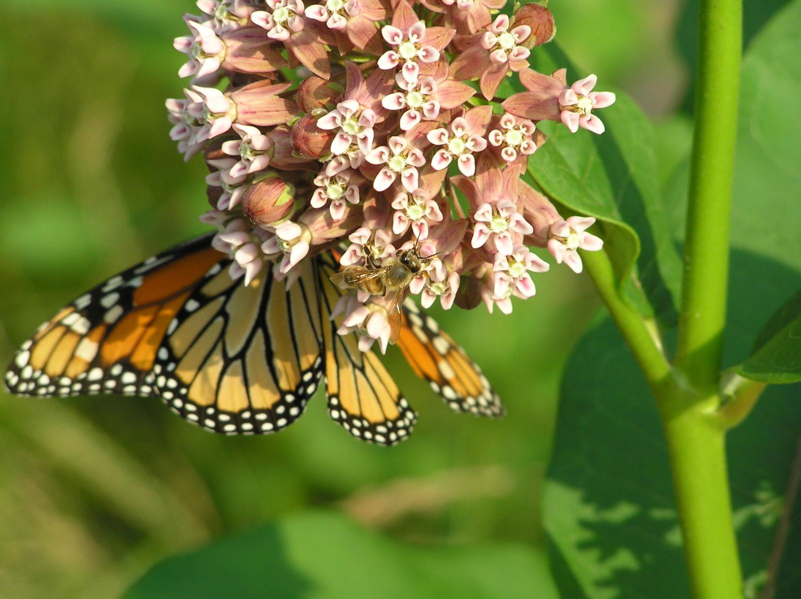 Participants | Monarchs
